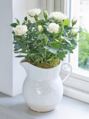 Country Style Cream Rose Jug