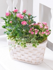 Pink Rose and Kalanchoe Basket