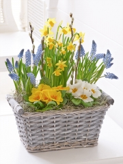 Spring Cheer Planted Basket
