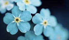 Some interesting and less known facts about flowers business